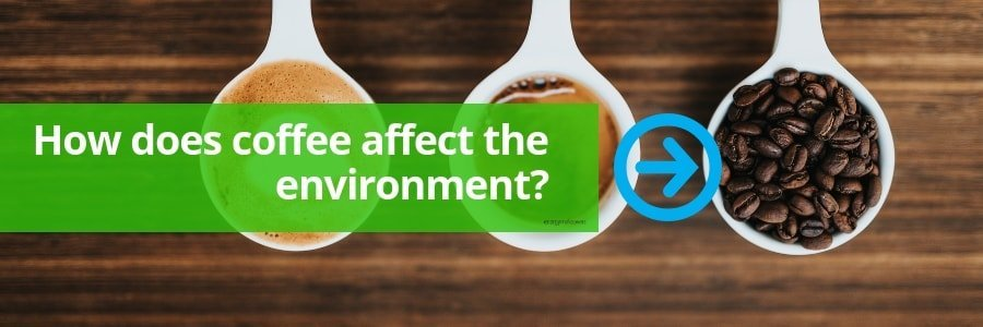How coffee affects the environment